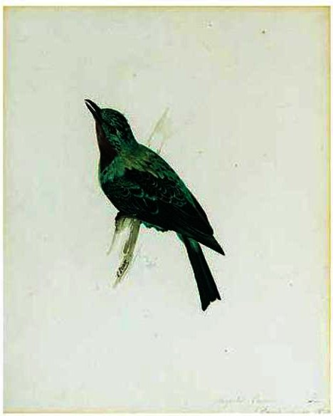 Achat Reproductions D'art Pop Art | Un Purple-Throated Bavard de Edward Lear | BuyPopArt.com
